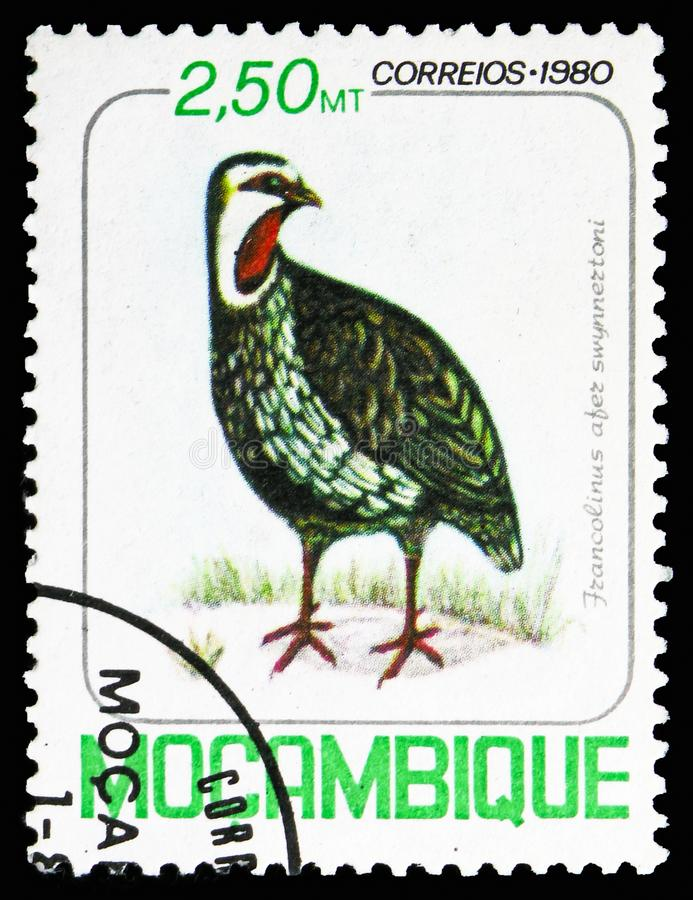 Red-necked Spurfowl (Pternistis afer swynnertoni), Birds serie, circa 1980. MOSCOW, RUSSIA - NOVEMBER 10, 2018: A stamp printed in Mozambique shows Red-necked stock image