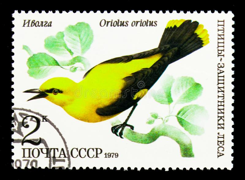 Golden Oriole (Oriolus oriolus), Birds serie, circa 1979. MOSCOW, RUSSIA - NOVEMBER 26, 2017: A stamp printed in USSR (Russia) shows Golden royalty free stock images