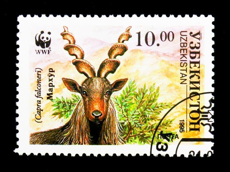 Markhor (Capra falconeri), WWF, The Makhor serie, circa 1995. MOSCOW, RUSSIA - NOVEMBER 26, 2017: A stamp printed in Uzbekistan shows Markhor ( stock images