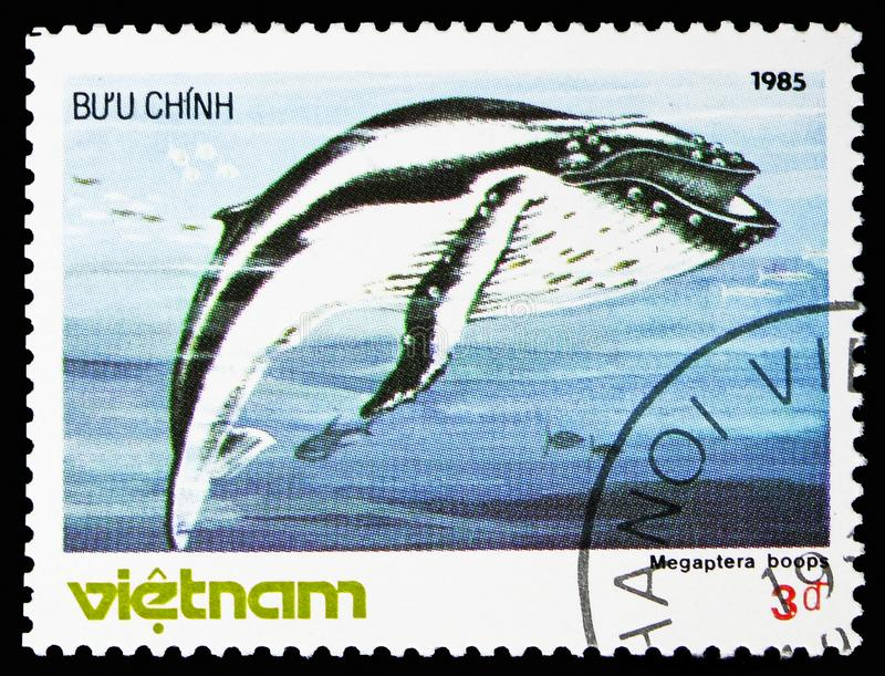 Humpback Whale (Megaptera novaeangliae), Whales serie, circa 1985 stock images