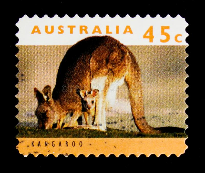 Eastern Grey Kangaroo Macropus giganteus, serie, circa 1994. MOSCOW, RUSSIA - OCTOBER 3, 2017: A stamp printed in Australia shows Eastern Grey Kangaroo Macropus stock photo