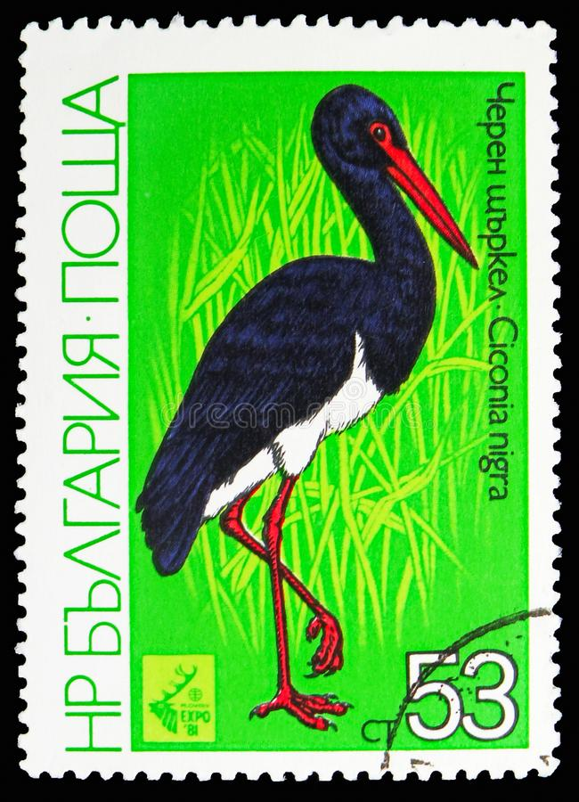 Black Stork (Ciconia nigra), International Hunting Exhibition EXPO '81, Plovdiv: Waders serie, circa 1981. MOSCOW, RUSSIA - OCTOBER 21, 2018: A stamp printed in royalty free stock images