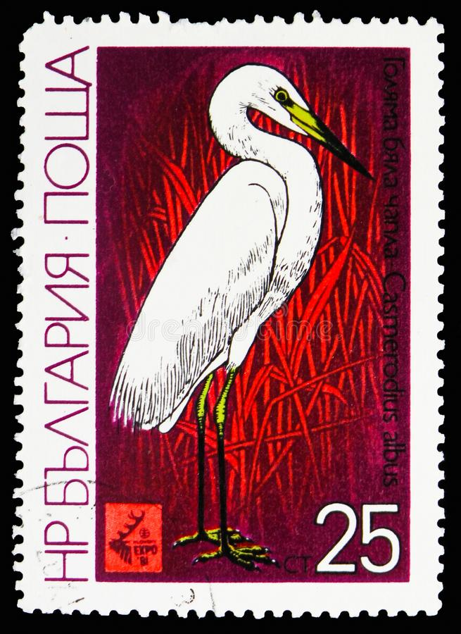 Great Egret (Casmerodius albus), International Hunting Exhibition EXPO '81, Plovdiv: Waders serie, circa 1981. MOSCOW, RUSSIA - OCTOBER 21, 2018: A stamp printed royalty free stock image
