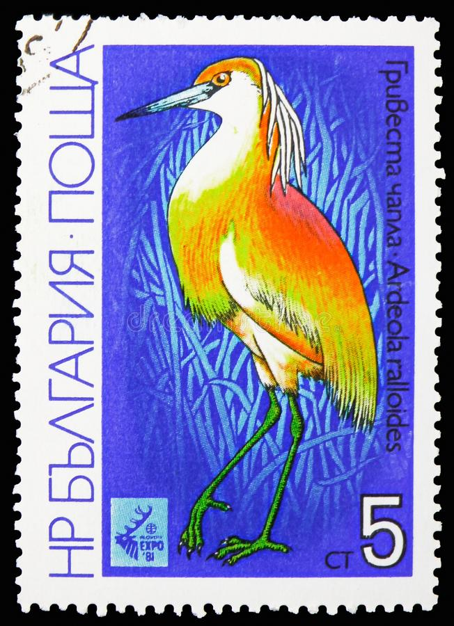 Squacco Heron (Ardeola ralloides), International Hunting Exhibition EXPO '81, Plovdiv: Waders serie, circa 1981. MOSCOW, RUSSIA - OCTOBER 21, 2018: A stamp royalty free stock photo