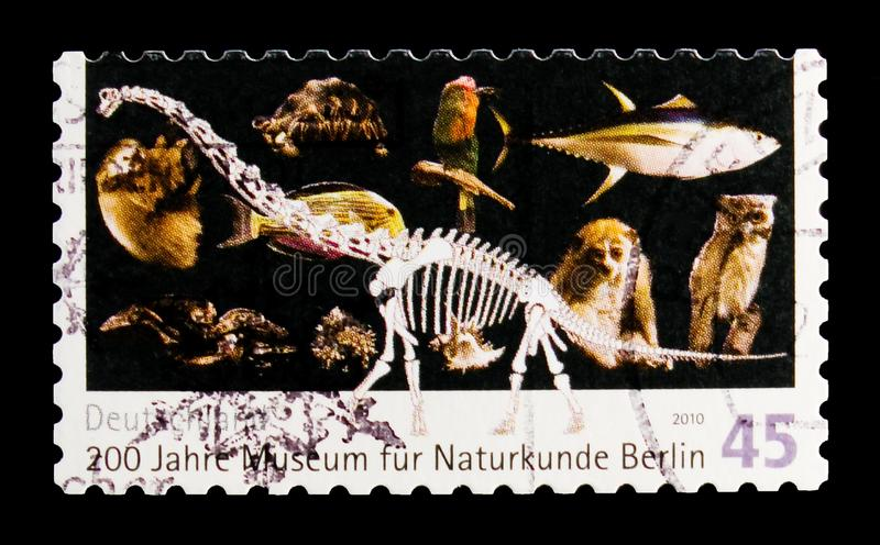 200 years Museum of Natural History, Berlin, serie, circa 2010. MOSCOW, RUSSIA - OCTOBER 21, 2017: A stamp printed in German Federal Republic devoted to 200 stock photos
