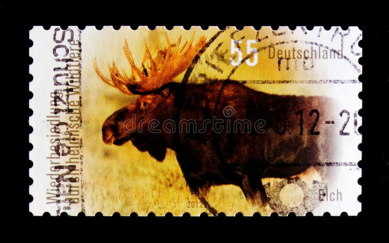 MOSCOW, RUSSIA - OCTOBER 21, 2017: A stamp printed in German Fed. Eral Republic shows Moose (Alces alces), Recolonization by native wildlife serie, circa 2012 stock photography