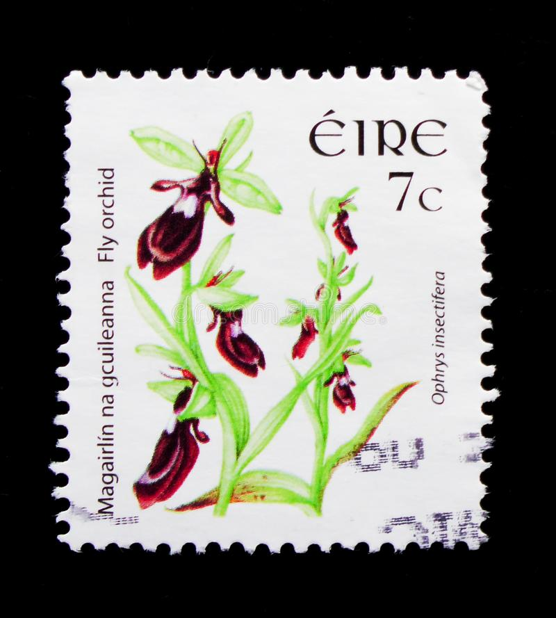 Ophrys insectifera - Fly orchid, Wild Flowers Definitives 2004-2011 serie, circa 2005 royalty free stock images