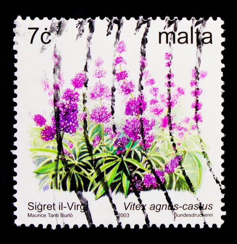 Virgin Bush Vitex agnus-castus and flowers, serie, circa 2003. MOSCOW, RUSSIA - OCTOBER 3, 2017: A stamp printed in Malta shows the Virgin Bush Vitex agnus stock images