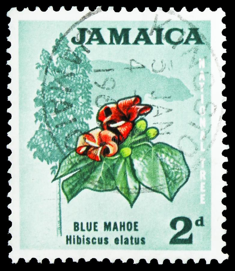 Blue mahoe - National Tree, Definitives serie, circa 1970. MOSCOW, RUSSIA - SEPTEMBER 22, 2019: Postage stamp printed in Jamaica shows Blue mahoe - National Tree stock images