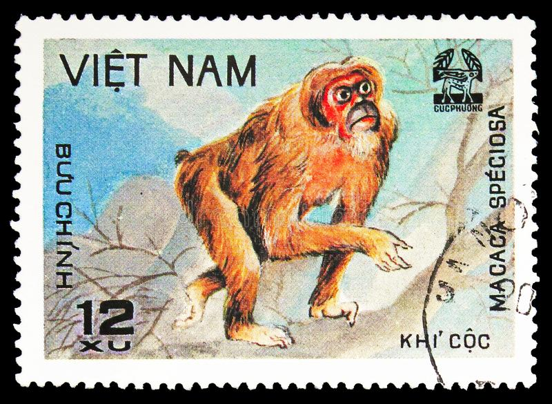Stump-tail Macaque Macaca speciosa, Animals from Cuc Phuona Nati Forest serie, circa 1981. MOSCOW, RUSSIA - SEPTEMBER 26, 2018: A stamp printed in Vietnam shows royalty free stock photo