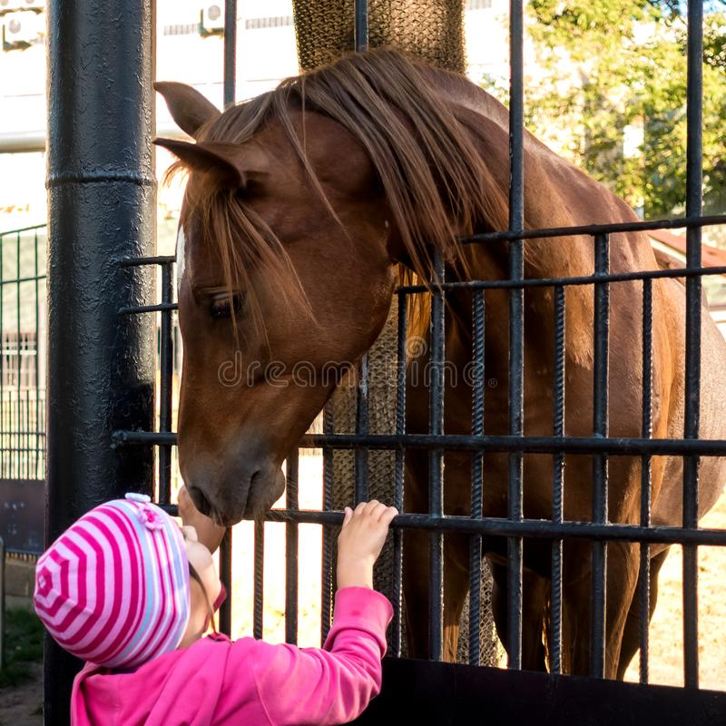 A little girl in a pink blouse looking at a horse. The child and the horse stock image