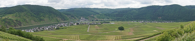 Moselle dolina, Niemcy zdjęcia stock