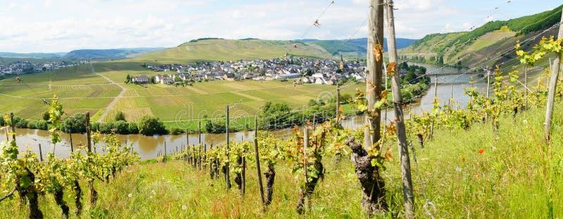 Moseltal mit Leiwen und Trittenheim panorama zdjęcia royalty free