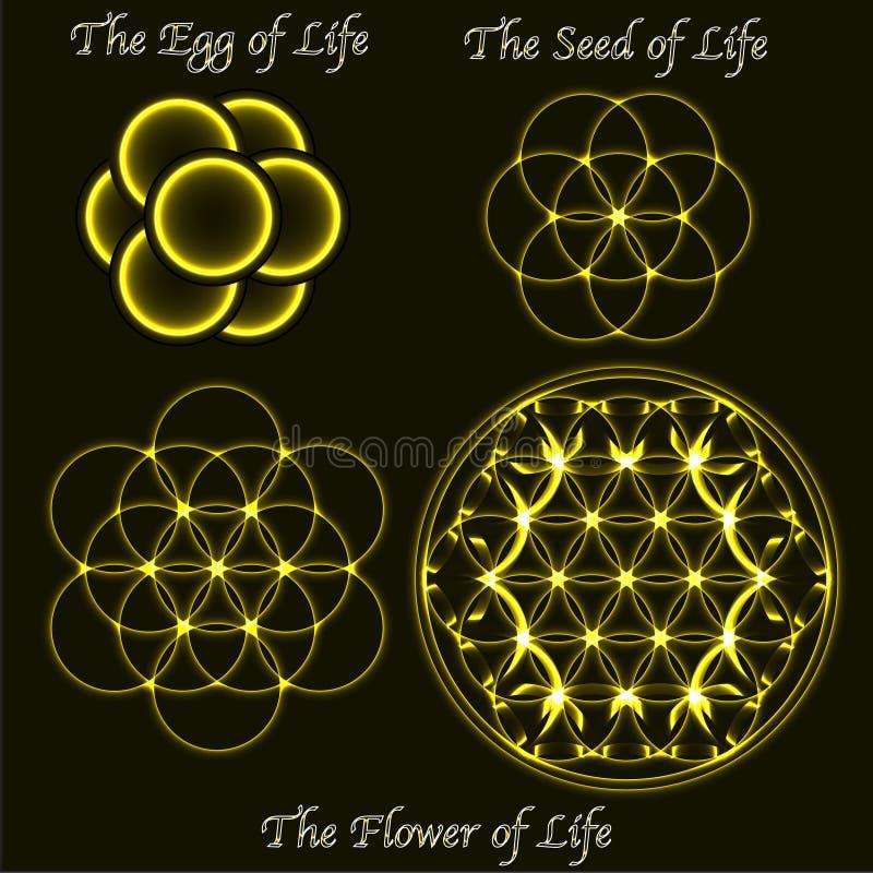 Mosiężny kwiat życie ewolucja, jajko, święci geometrii ziarna symbole ilustracji