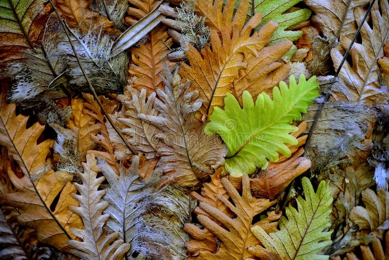Repeated shapes of tangled fern leaves depict the cycle of life from birth to death royalty free stock image