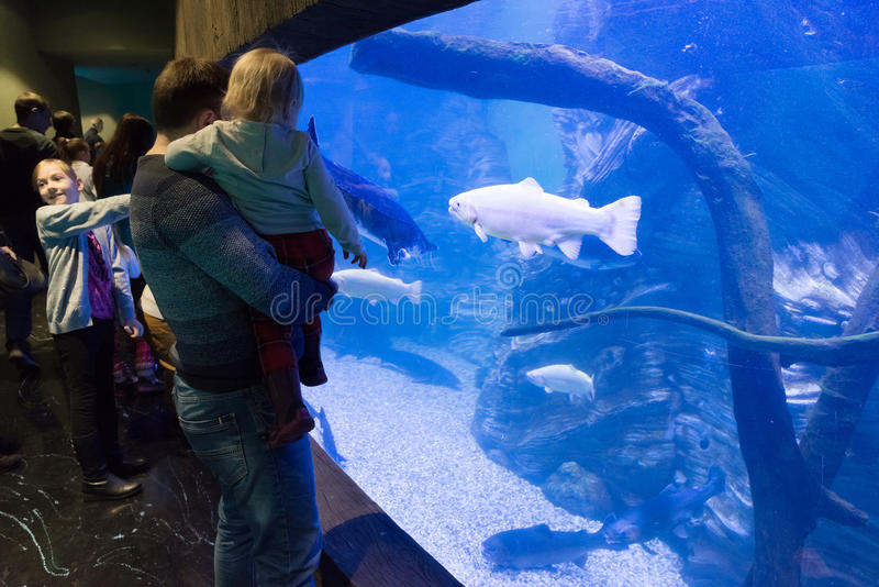 Moskau, Russland - 10. Dezember 2016 Leute um Aquarium in Krokus-Stadt oceanarium bei Krasnogorsk lizenzfreie stockbilder