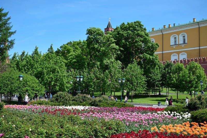 Moskou, Rusland - Mei 13, 2019: Bloembedden met tulpen in Alexander Garden stock afbeelding