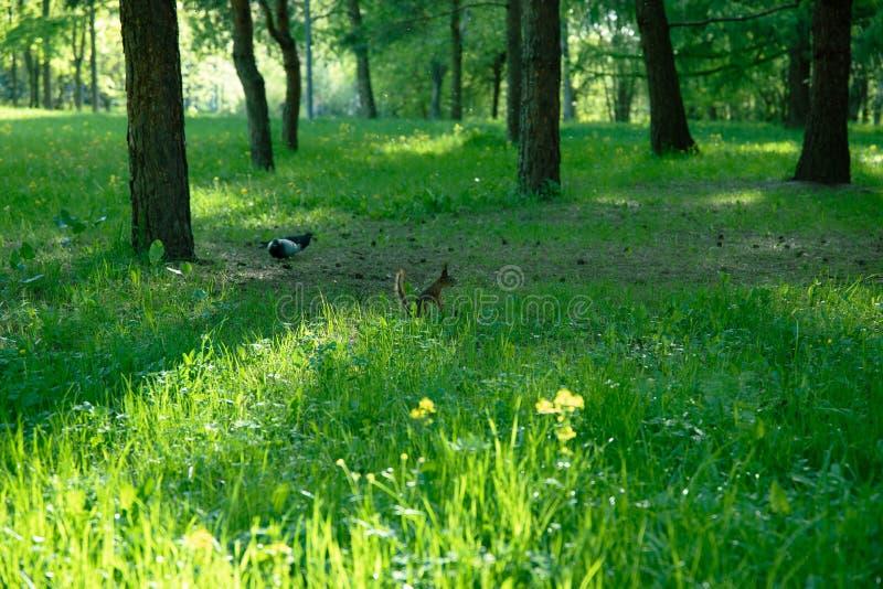 MOSKOU RUSLAND Park met een eekhoorn stock foto's