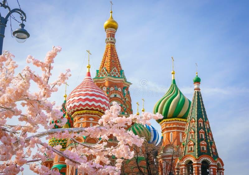 Moskva och St Basil Cathedral på vårdagen till och med blomningträd royaltyfri fotografi