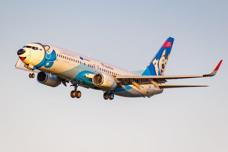 Moskva Ryssland - Juni 20, 2019: FlygplanBoeing 737-8ASWL VQ-BQT Laika special livré av NordStar flygbolag som landar på Domodedo royaltyfria bilder