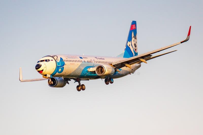 Moskva Ryssland - Juni 20, 2019: FlygplanBoeing 737-8ASWL VQ-BQT Laika special livré av NordStar flygbolag som landar på Domodedo arkivbilder