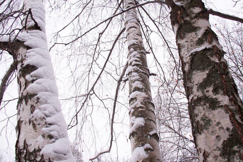 Moskwa Rosja zimy śnieżny dzień w miasto parku fotografia royalty free
