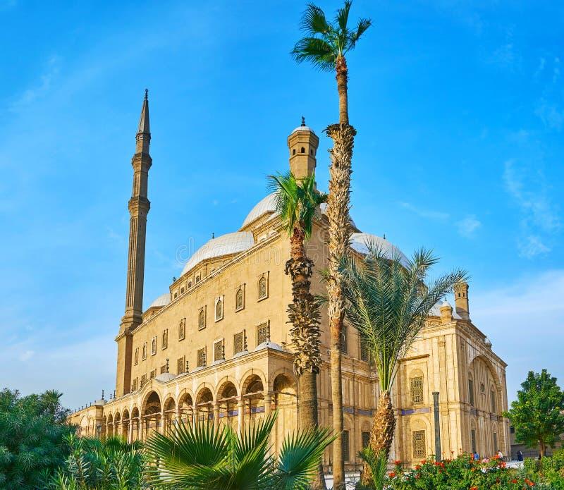Mosquée d'albâtre derrière les paumes, le Caire, Egypte image libre de droits