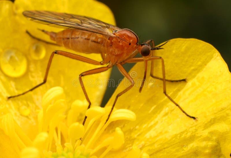 Mosquito stock photos