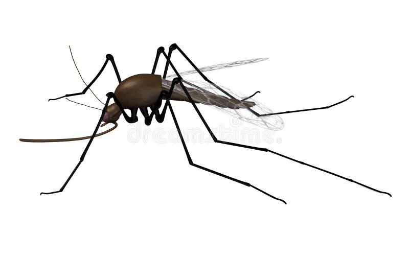Mosquito ilustração stock