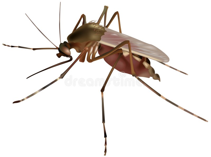 Mosquito libre illustration