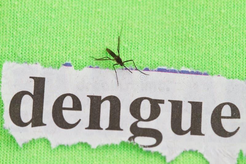 Mosquito foto de archivo libre de regalías