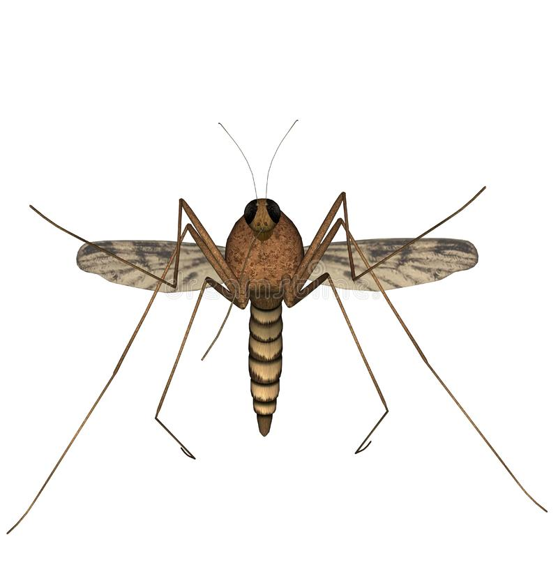 Mosquito Free Stock Photo