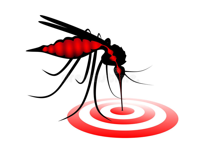 Download Mosquito stock image. Image of sting, abstract, diseases - 37736391