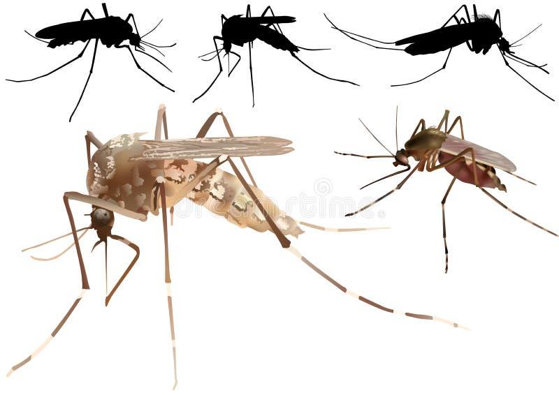 mosquito ilustração royalty free