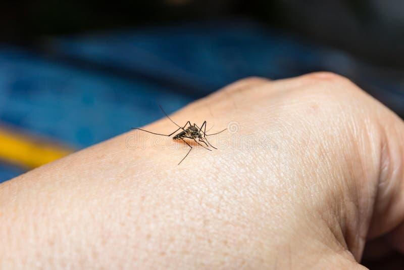 mosquito fotografía de archivo