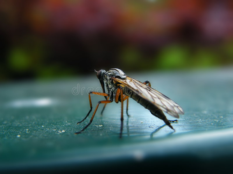 Mosquito imagen de archivo libre de regalías
