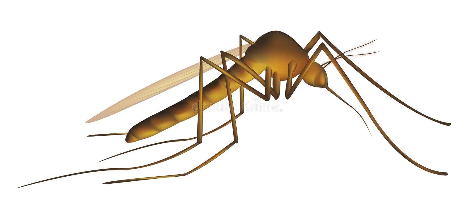 Download Mosquito stock illustration. Illustration of background - 7023814