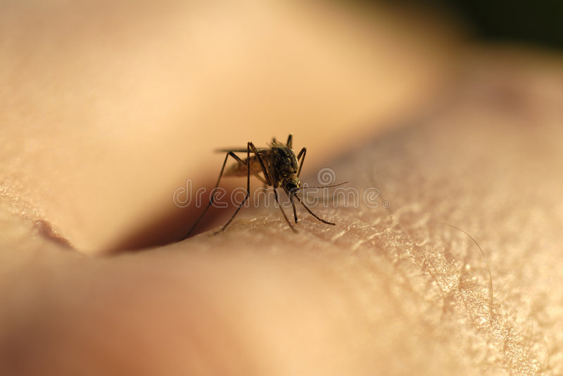 Mosquito bite. Bite of a mosquito in the hand royalty free stock photography