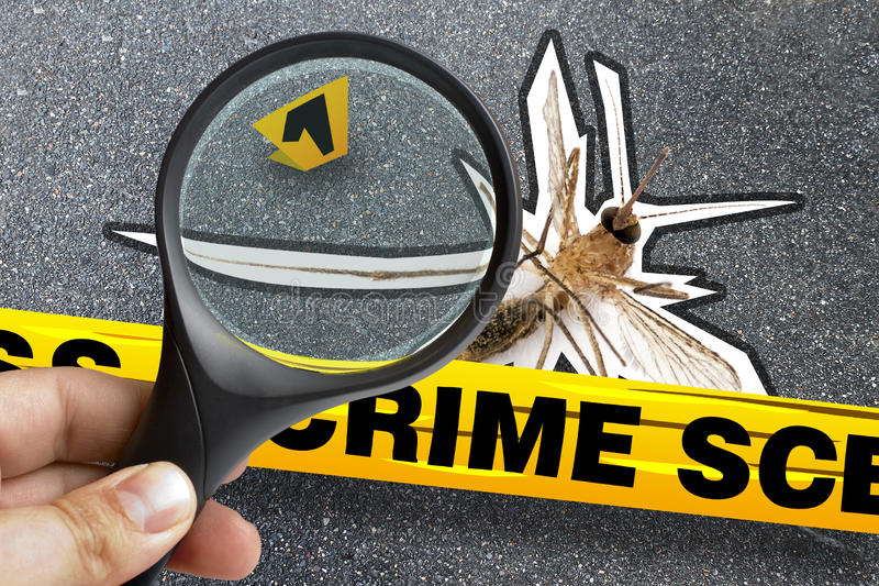 Mosquito Dead Closeup Crime Scene Magnifying Marker royalty free stock images