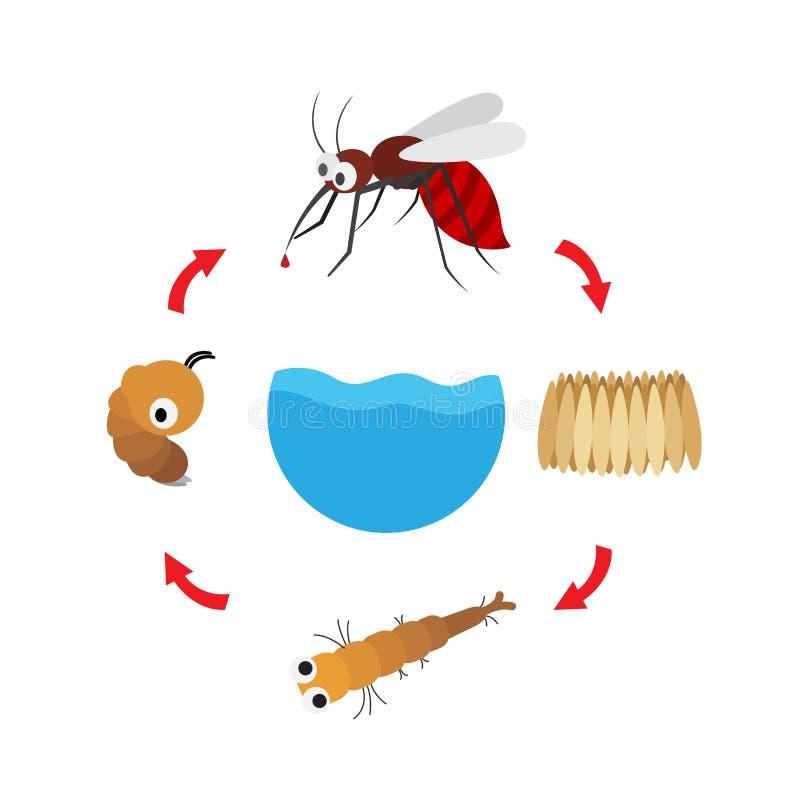 Mosquito do ciclo de vida da ilustração ilustração do vetor