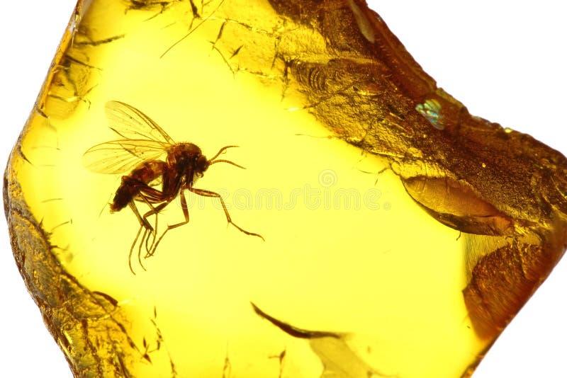 Mosquito fungoso 01 foto de archivo libre de regalías