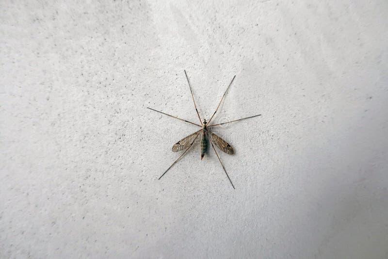 Mosquito grande en la pared imagenes de archivo