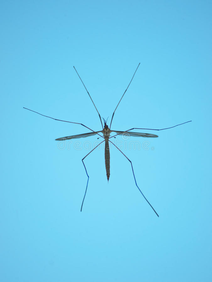 Download Mosquito hawk stock photo. Image of mosquitoes, vertical - 19477776