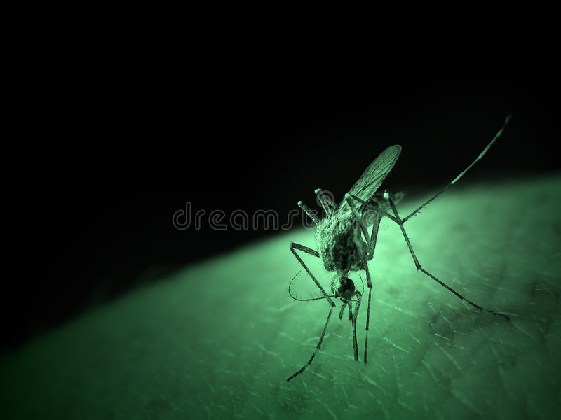 Mosquito infrared royalty free stock photos