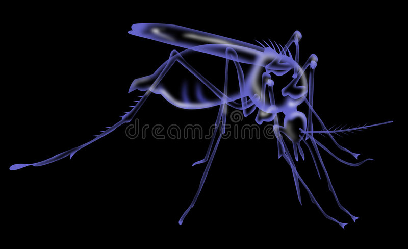 Mosquito insect x-ray vector illustration