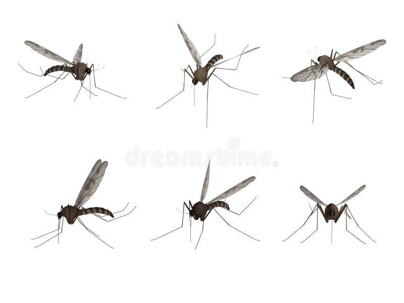 Mosquito, isolado no fundo branco ilustração do vetor