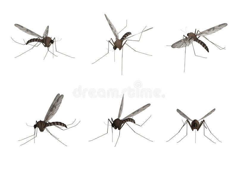 Mosquito, isolated on white background vector illustration