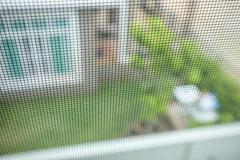 Mosquito net wire screen on house window protection. Against insect stock images
