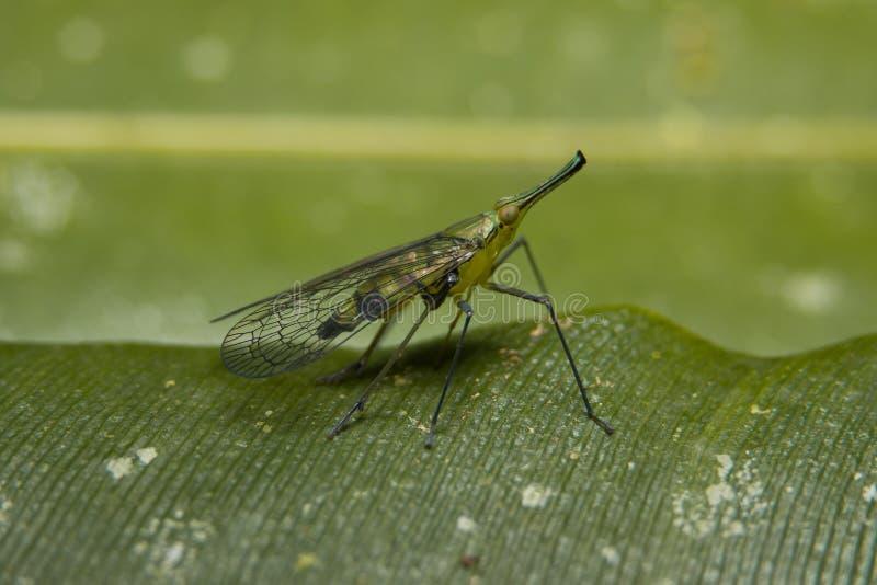 Mosquito tropical foto de stock royalty free