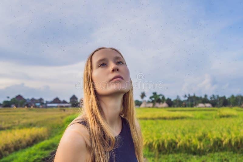 Mosquitos em torno de uma mulher na natureza no campo imagem de stock royalty free